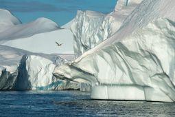 Eisberge-und-Moewe-Westkueste-Groenland-Fotoreise