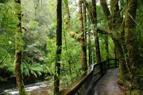 Kurzwanderung auf Tasmanien am Franklin River