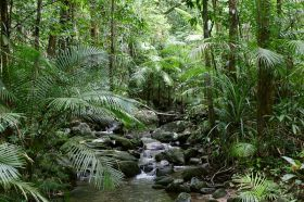 daintree-river-mossman-gorge